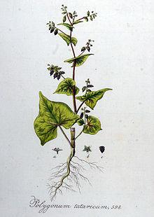 Quelle Wikimedia