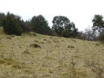 Eifel Heidelandschaft