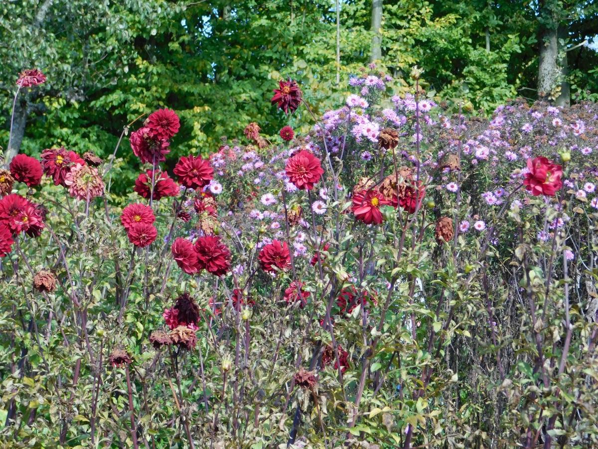 Hefe-Muffins und Blumen zum Freuen