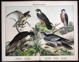 Graphik Verlag 1890