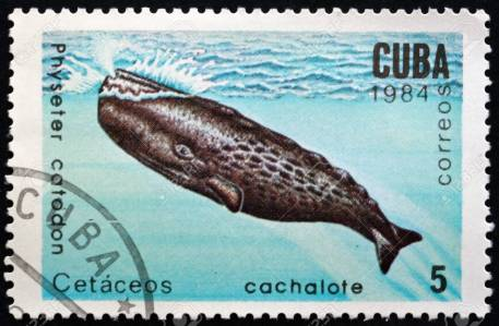 CUBA - CIRCA 1984: a stamp printed in the Cuba shows Sperm Whale, Physeter Catodon, Marine Mammal, circa 1984