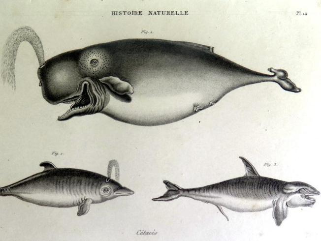 alter STich Wale
