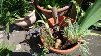 Es ist wunderbar, wenn die eigene Mutter ein Gartenparadiwe hat, wo man immer wieder wunderbare Ableger findet!
