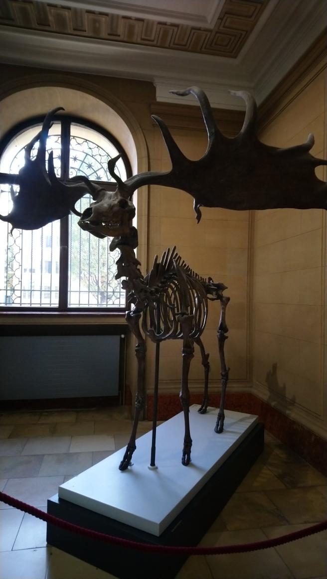 Urzeitlöcher Riesenhirsch