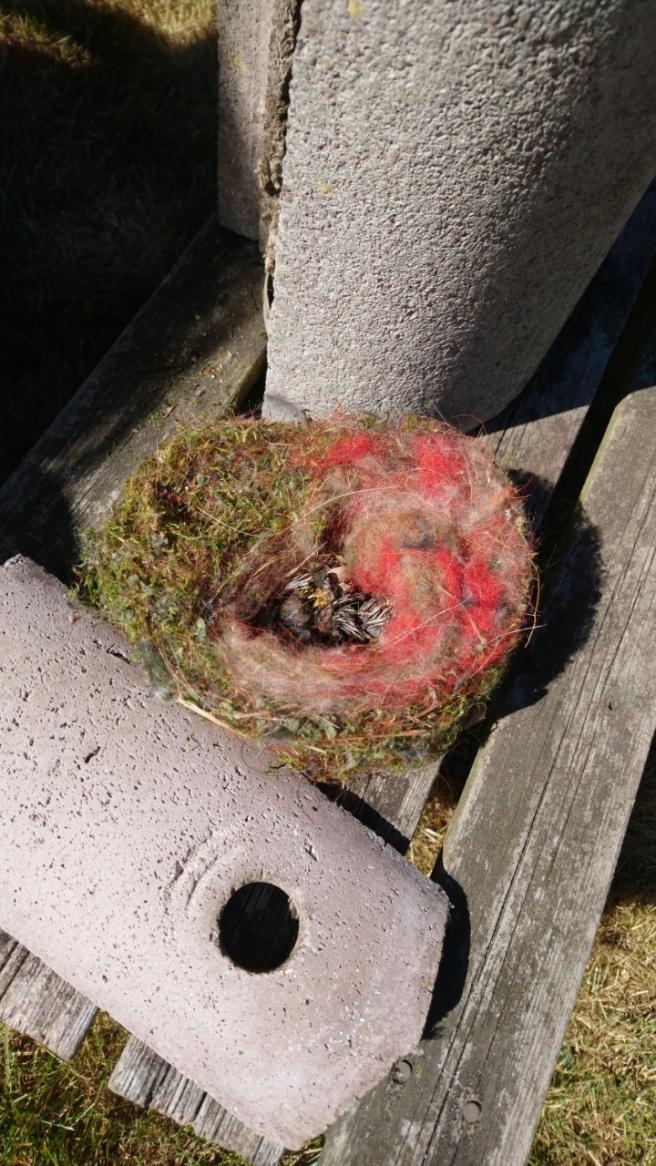 Meißen Krankheit Nest