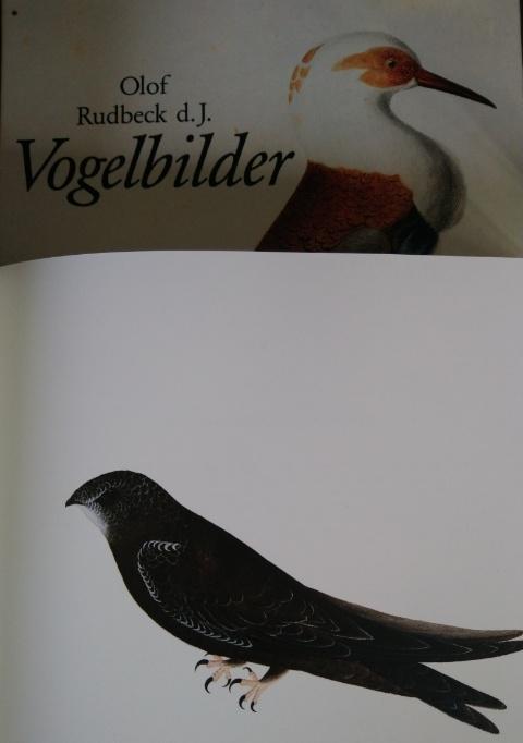 Zeichnung Olof Rudbeck d. J.